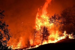 Le foreste distrutte dagli incendi in California potrebbero non ricrescere mai più