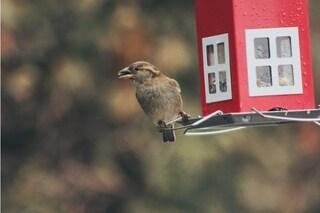 Migliori casette per uccelli: come scegliere il nido ideale
