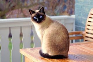 I migliori repellenti per gatti: classifica 2020 e guida all'acquisto