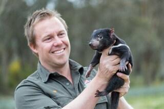 Il diavolo della Tasmania reintrodotto nell'Australia continentale dopo 3mila anni