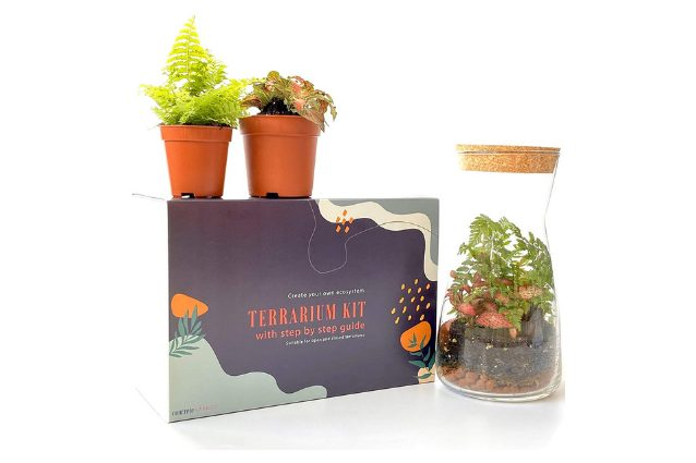 Concretelab&co kit con felce e fittonia
