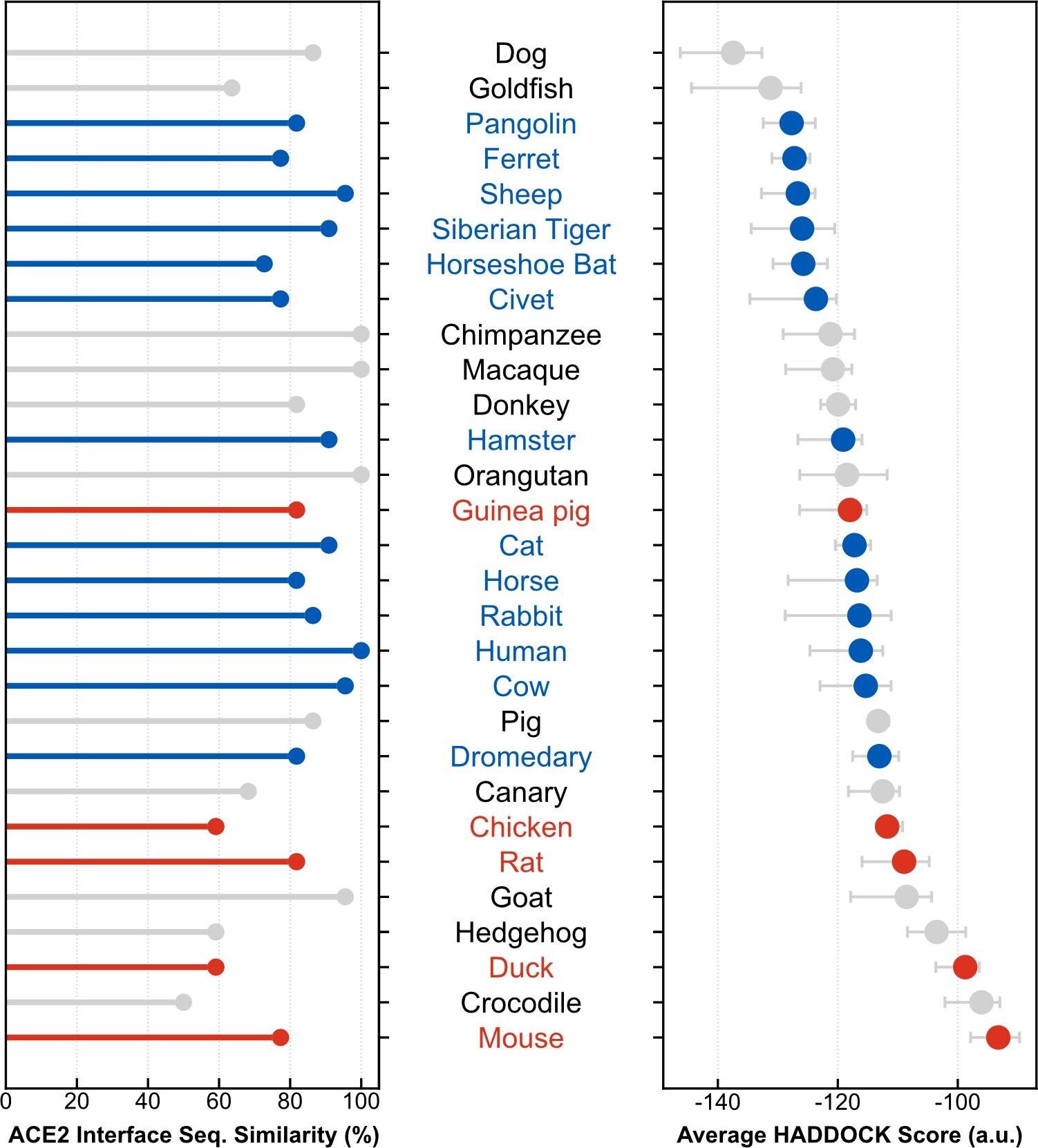 In blu le specie animali suscettibili al coronavirus; in rosso quelle immuni; in grigio quelle per cui non è stato possibile arrivare a un dato conclusivo / Plos Computational Biology