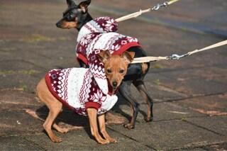 Miglior cappotto per cani: classifica e come sceglierli