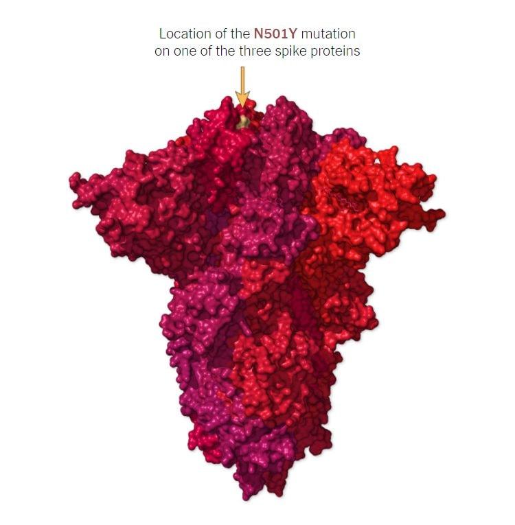 La mutazione N501Y su una singola proteina del trimero Spike