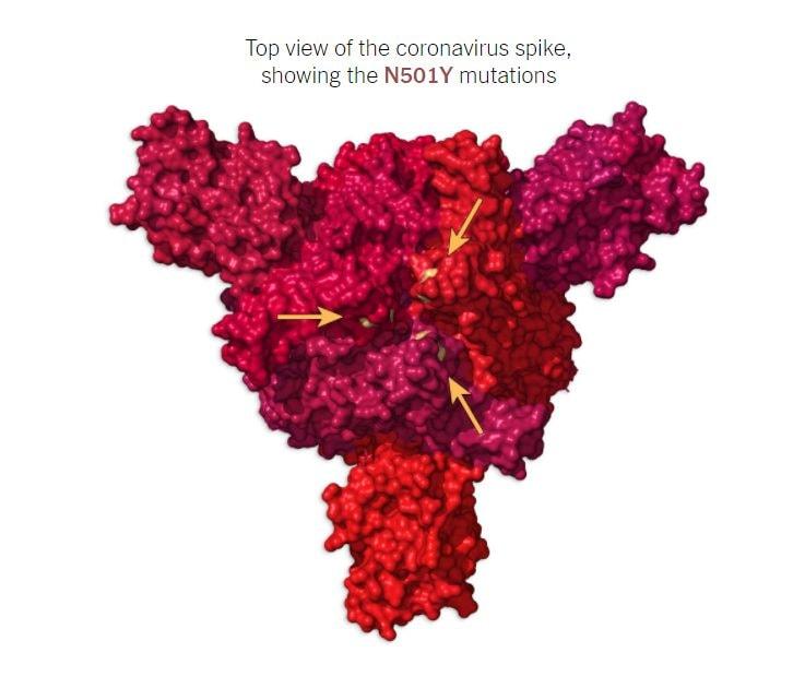 Vista dall'alto della proteina Spike con le mutazioni N501Y