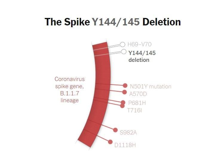 La delezione Y144/145 sul gene della proteina Spike della variante B.1.1.7