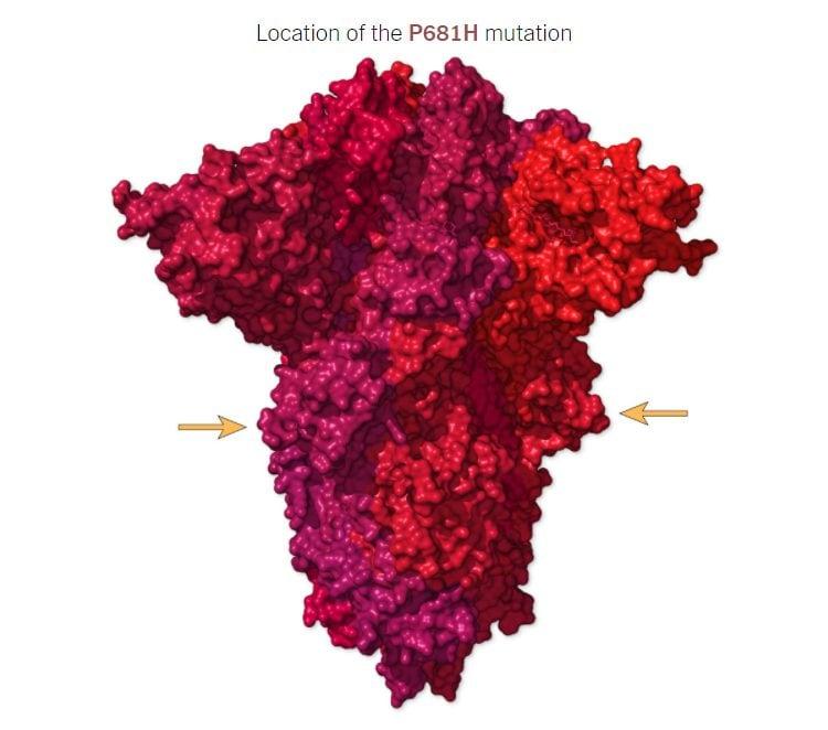 La posizione della mutazione P681H sulla proteina Spike
