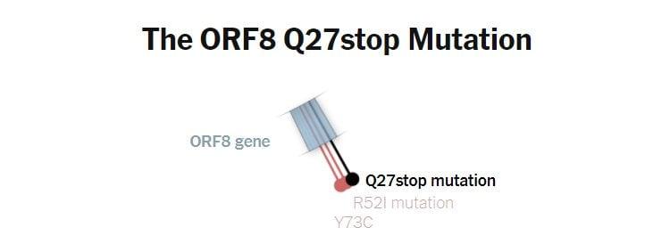 La mutazione Q27 sul gene della proteina Orf8 della variante B.1.1.7