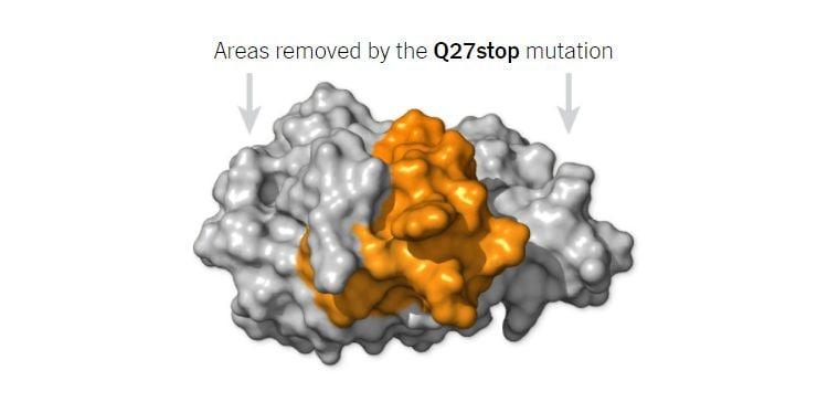 La proteina Orf8 della variante B.1.1.7, in grigio le porzioni proteiche non sintetizzate