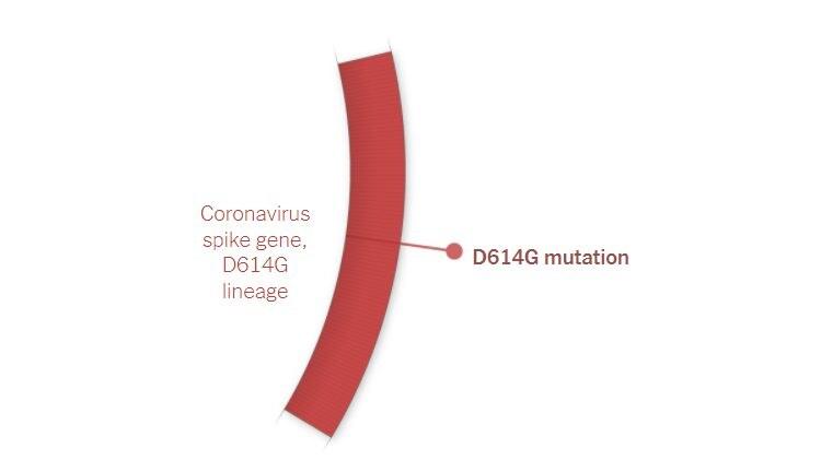 La mutazione D614G sul gene della proteina Spike