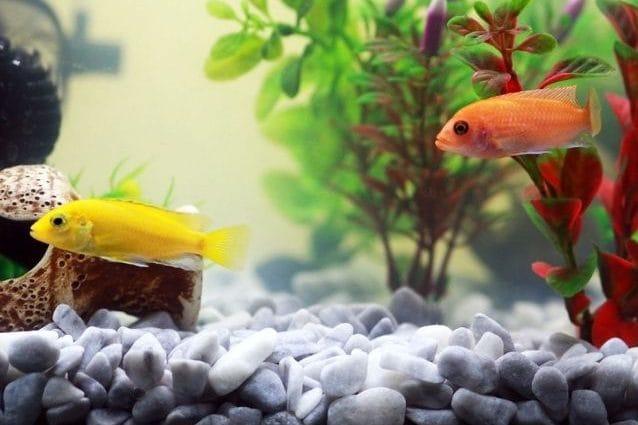 fertilizzante per acquario