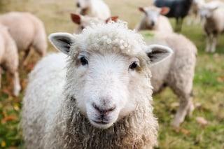 Non riesci a contare le pecore per addormentarti? Forse hai l'afantasia: ecco cos'è