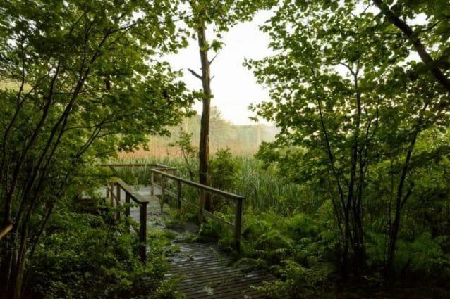 """Un'espressione giapponese che significa """"bagno nella foresta"""" suggerisce che il tempo trascorso nella natura può ridurre lo stress / Peter Morenus – UConn foto"""