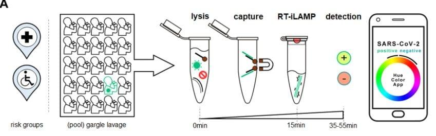 Cap–iLAMP per rilevare SARS–CoV–2 / Nature Communications