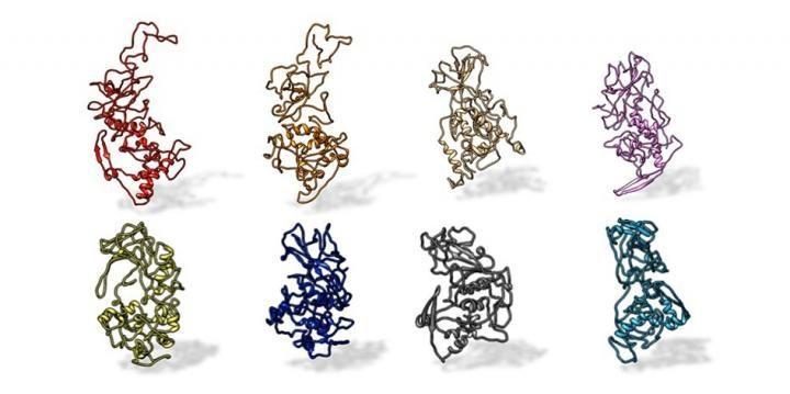La proteina N di SARS–CoV–2 nei coronavirus pandemici correlati alla SARS (in alto, da sinistra: SARS–CoV–2 nell'uomo, nello zibetto, SARS–CoV, MERS). E' diversa dalla proteina N di altri coronavirus non correlati alla Sars, come quelli che causano il comune raffreddore (in basso, da sinistra: OC43, HKU1, NL63 e 229E).