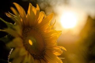 La luce solare distrugge il coronavirus molto più velocemente di quanto previsto