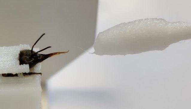 Un'ape coinvolta nei test. Credit: InsectSense/Università di Wageningen