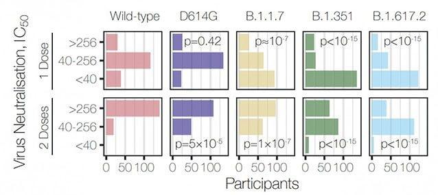 Neutralizzazione delle diversi varianti virali dopo una e due dosi di vaccino Pfizer / The Lancet