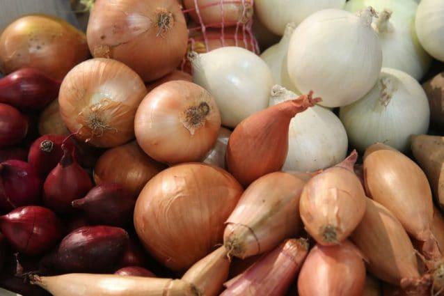 Perché le cipolle stanno facendo ammalare centinaia di americani