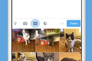Twitter aumenta il limite di peso per le GIF animate a 15 MB