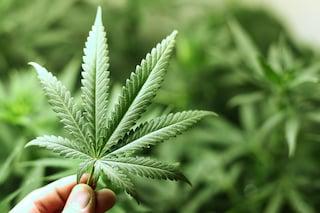 Da Google stop alle app per la vendita di marijuana: bandite dal Play Store