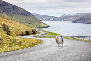 Con Sheep View 360 si visitano le Isole Faroe sul dorso di una pecora (in attesa di Google)