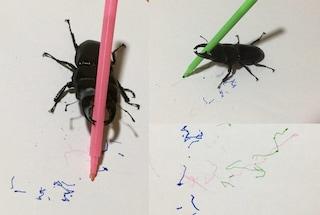 Spike, l'insetto artista che è una star del web