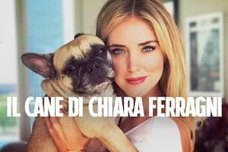 Il cane di Chiara Ferragni ha più follower di te su Instagram