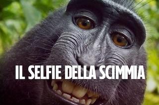 """Il """"selfie della scimmia"""" è del fotografo David Slater: conclusa la battaglia legale"""