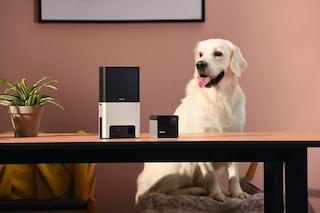 """""""Alexa, dai da mangiare al cane"""": ecco le videocamere per sorvegliare fido dallo smartphone"""