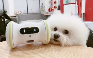 Ecco Varram, il robot per far dimagrire cani e gatti