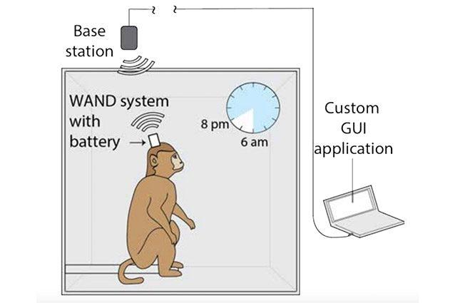 wand dispositivo wireless