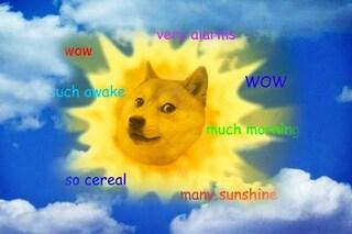 Chi è Kabosu the doge, il cane meme più famoso del web