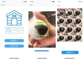 Con gli algoritmi di riconoscimento canino sarà possibile ritrovare i cani scomparsi