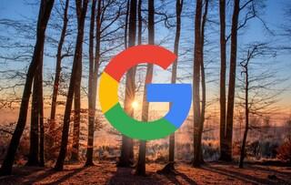 Google ha comprato 16 ettari di terreno per piantare alberi