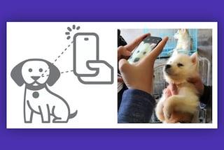 La Cina vuole usare il riconoscimento facciale anche sui cani