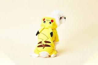 Ora puoi vestire il tuo cane come un Pokémon