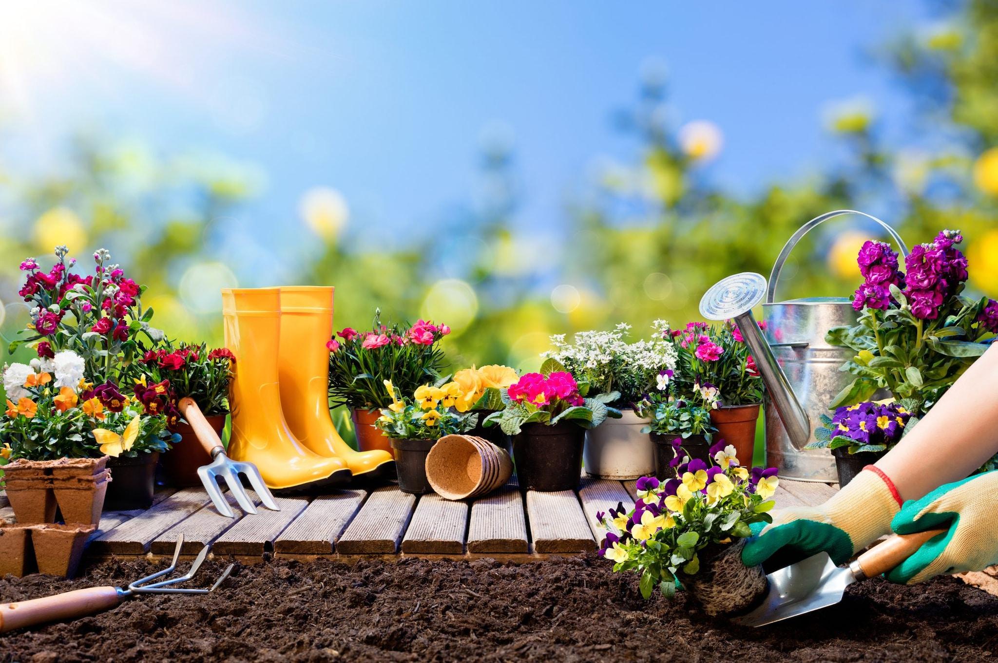 Come Curare Le Piante come curare il giardino in inverno, primavera ed estate