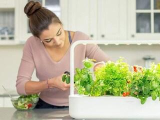 I migliori smart garden del 2020: guida all'acquisto