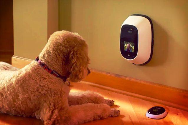 migliori accessori tech per cani