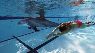 Basta delfini negli acquari, arrivano i delfini robot radiocomandati