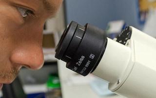 Biotecnologie e cellule coltivate in 3D: così può accelerare la ricerca sul coronavirus