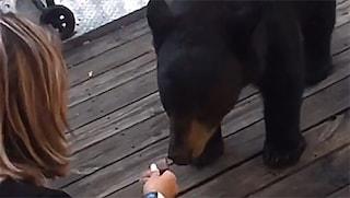 Ha dato da mangiare a un orso per un TikTok virale: ora rischia il carcere