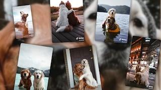 L'amicizia tra questi due cani ha conquistato TikTok: i video più commoventi