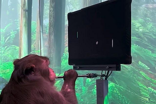 Dopo le scimmie, Elon Musk vuole testare i primi chip nel cervello degli umani entro il 2021