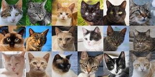 Questi gattini non esistono: li ha creati una intelligenza artificiale