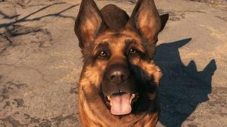 Addio River, pastore tedesco a cui è ispirato il cane Dogmeat di Fallout 4