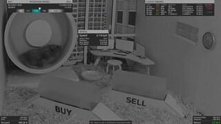 Questo criceto vende e compra criptovalute (e guadagna più dell'indice S&P 500)