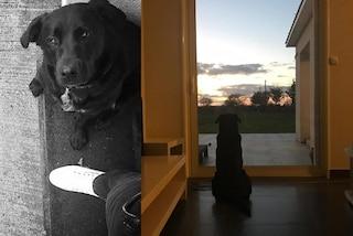 La foto del cane Nala che attende Emiliano Sala sulla porta di casa