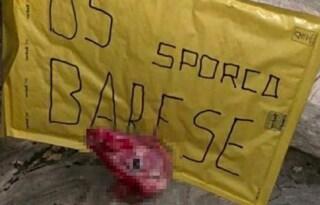 Taranto, minacce al ds De Santis: ritrovata una testa d'agnello mozzata